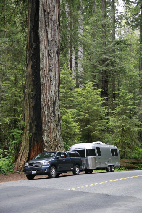 Click image for larger version  Name:Humbling redwoods.jpg Views:83 Size:244.2 KB ID:59983