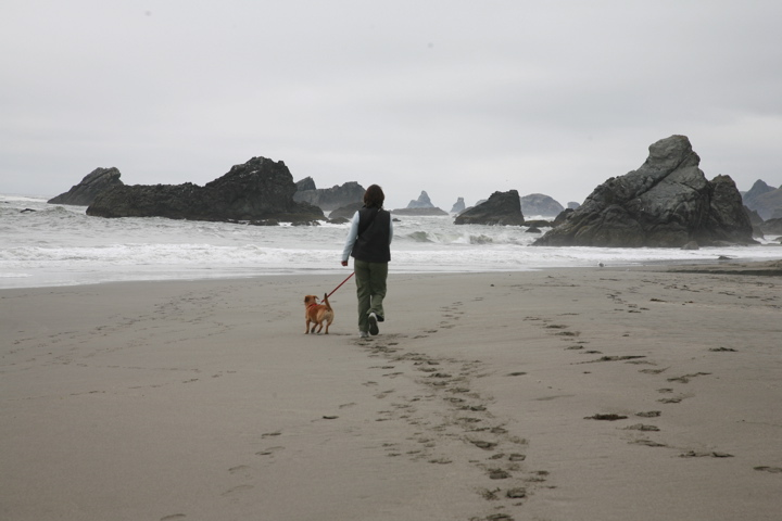 Click image for larger version  Name:Harris Beach SP,OR.jpg Views:96 Size:95.6 KB ID:59984