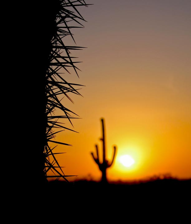 Click image for larger version  Name:Picacho_Apr08_Sunset_03_Sm.jpg Views:69 Size:59.9 KB ID:60498