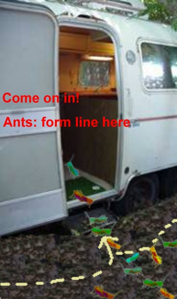Click image for larger version  Name:ants here.jpg Views:297 Size:80.2 KB ID:6141