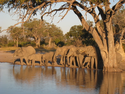 Click image for larger version  Name:Elephants Drinking.jpg Views:61 Size:97.2 KB ID:62284
