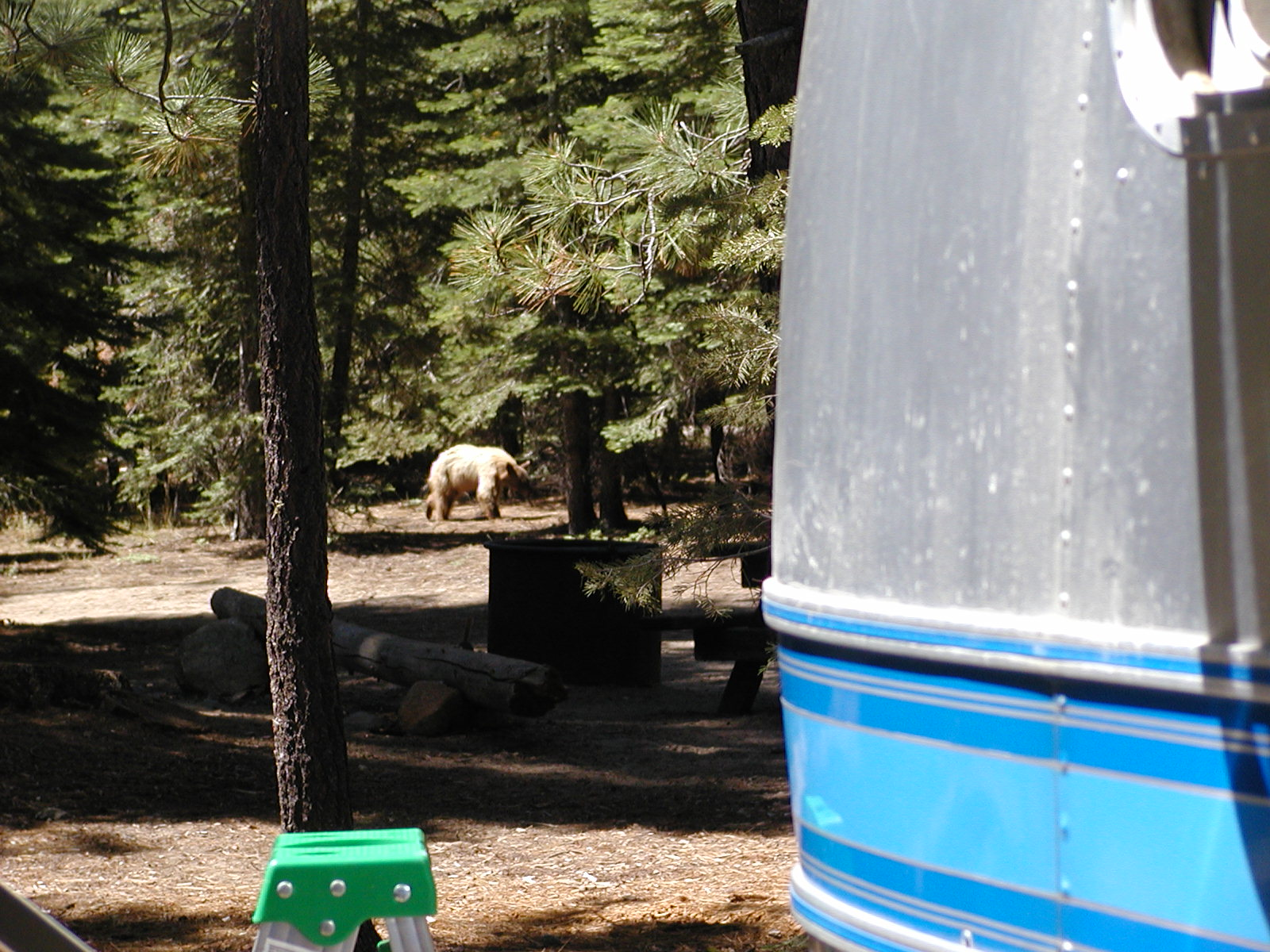Click image for larger version  Name:Sugar Pine Point 077.jpg Views:149 Size:420.2 KB ID:63172
