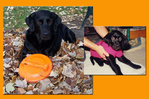Click image for larger version  Name:Taz Fall Contest copy.jpg Views:134 Size:71.9 KB ID:6518