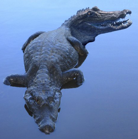 Click image for larger version  Name:2headed_gator.jpg Views:78 Size:109.2 KB ID:65861