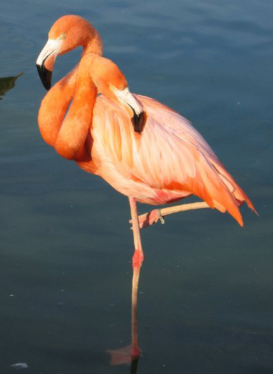 Click image for larger version  Name:2headed-flamingo.jpg Views:71 Size:107.0 KB ID:65862