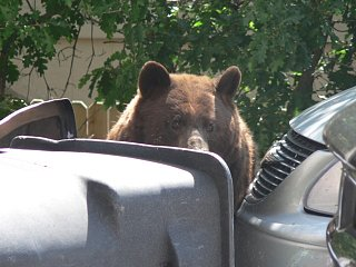 Click image for larger version  Name:Bear Lunch.JPG Views:115 Size:76.0 KB ID:66456