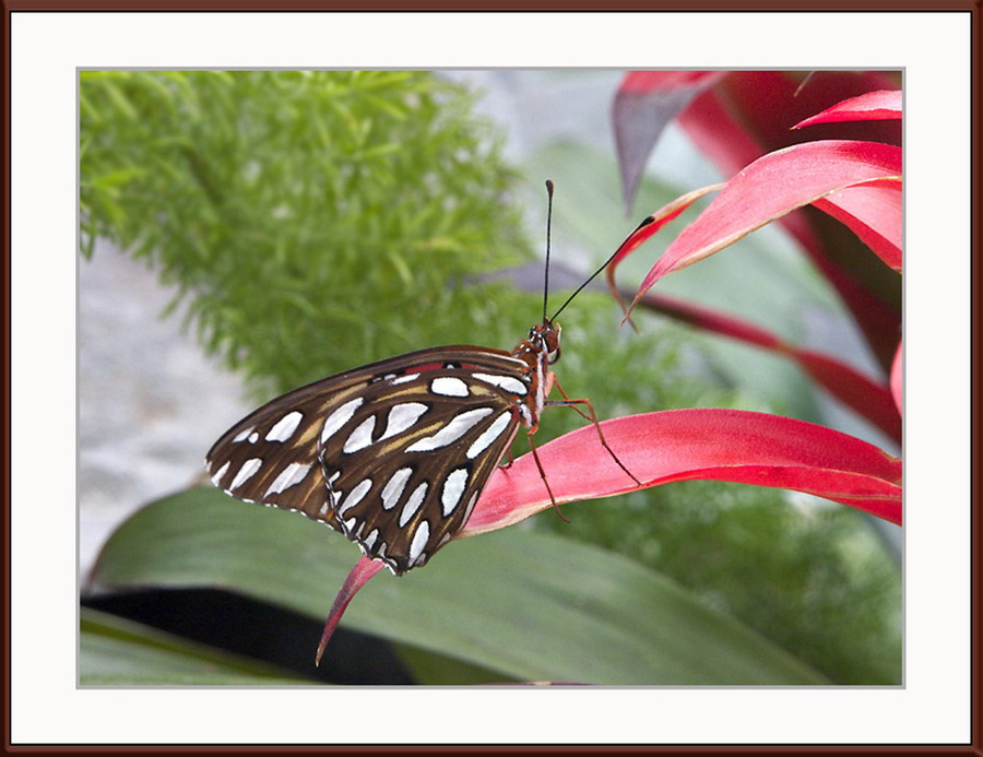 Click image for larger version  Name:butterfly4.jpg Views:76 Size:130.1 KB ID:66716