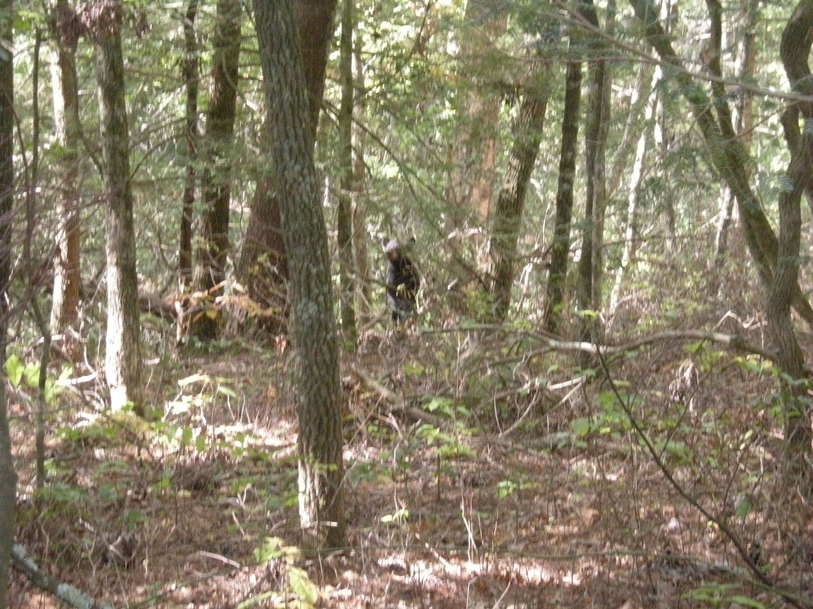 Click image for larger version  Name:bear Cades Cove.jpg Views:78 Size:483.8 KB ID:69516