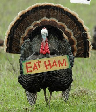Click image for larger version  Name:thanksgiving.jpg Views:63 Size:40.3 KB ID:71125