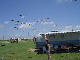 Click image for larger version  Name:Galveston State Park - Ike Victim JPG.jpg Views:135 Size:82.4 KB ID:71301