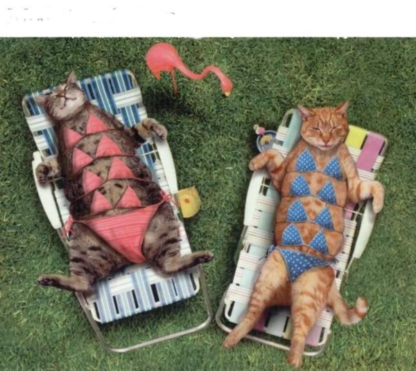 Click image for larger version  Name:sunbathers.jpg Views:301 Size:98.7 KB ID:7156