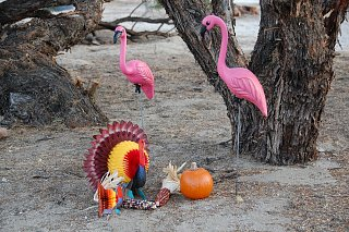 Click image for larger version  Name:DSC_0074 Flamingo and turkeys.jpg Views:104 Size:738.3 KB ID:71843