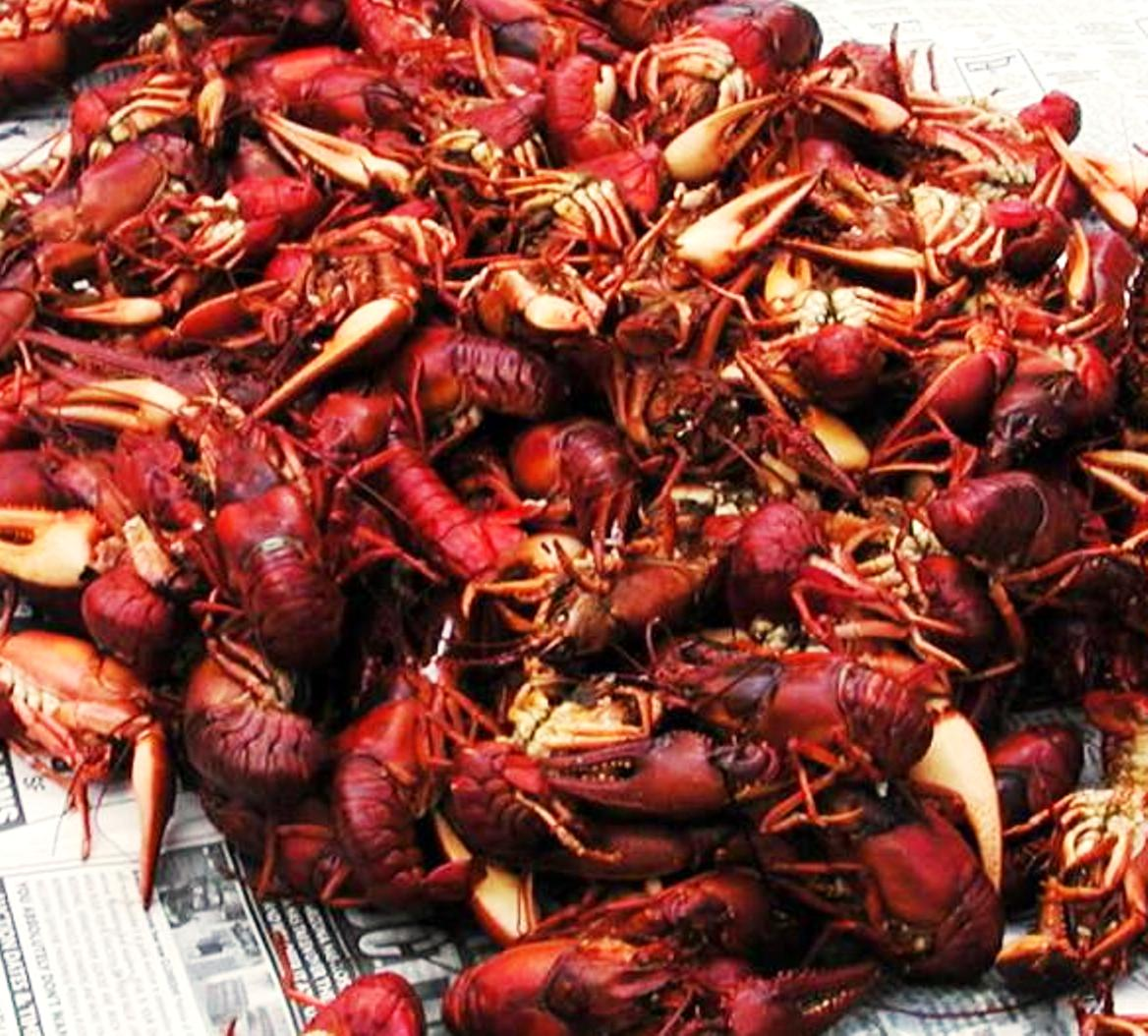 Click image for larger version  Name:crayfish2.jpg Views:87 Size:195.5 KB ID:73563