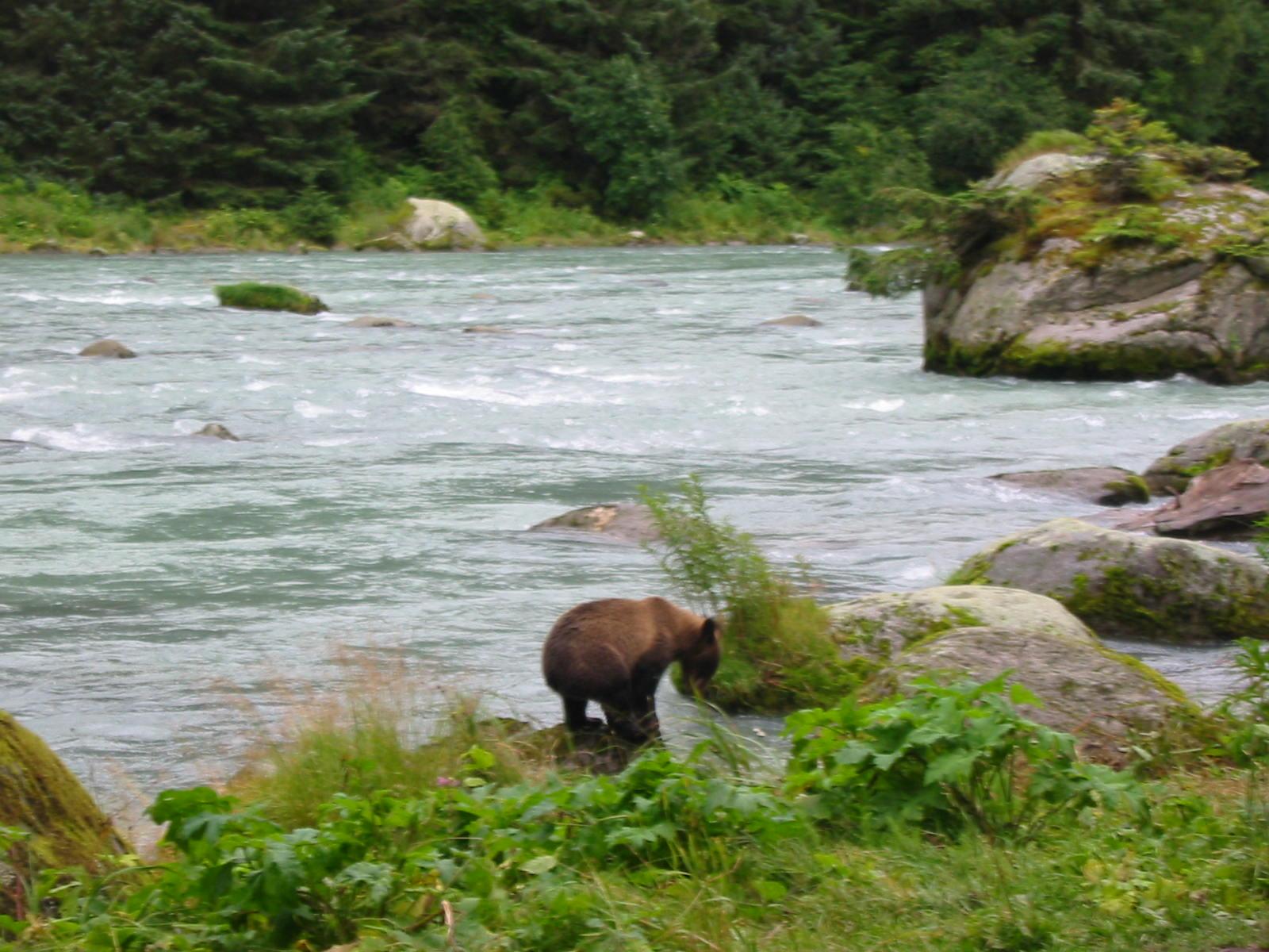 Click image for larger version  Name:Alaska 2006_20060813_532.JPG Views:57 Size:268.1 KB ID:73734