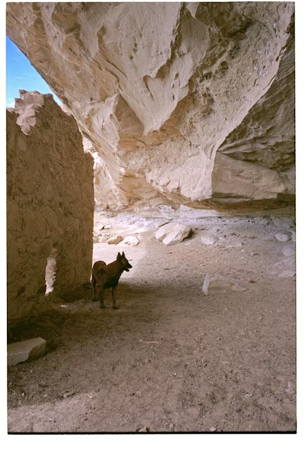 Click image for larger version  Name:Chaco_August0102008.jpg Views:256 Size:81.6 KB ID:74355