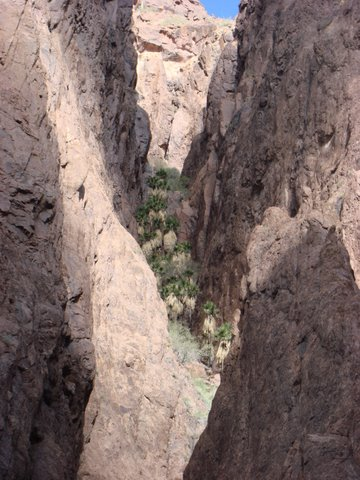 Click image for larger version  Name:palm canyon 2.jpg Views:134 Size:60.3 KB ID:74497