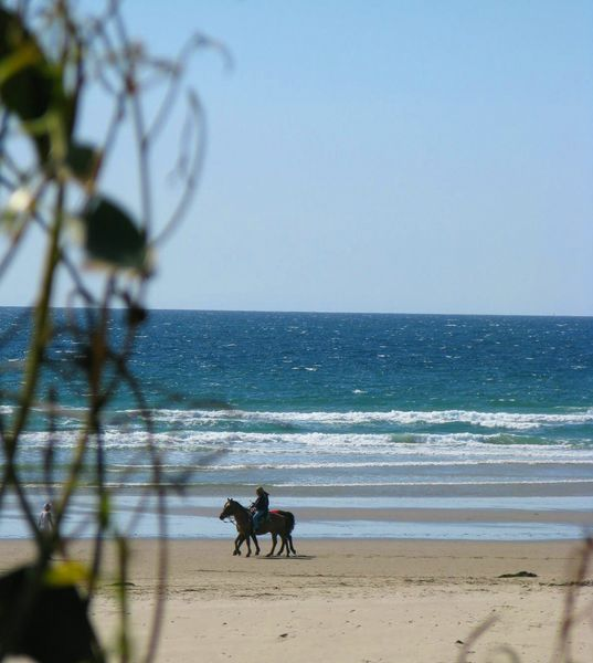 Click image for larger version  Name:horses at pismo march 2009 [800x600].jpg Views:74 Size:54.1 KB ID:76614