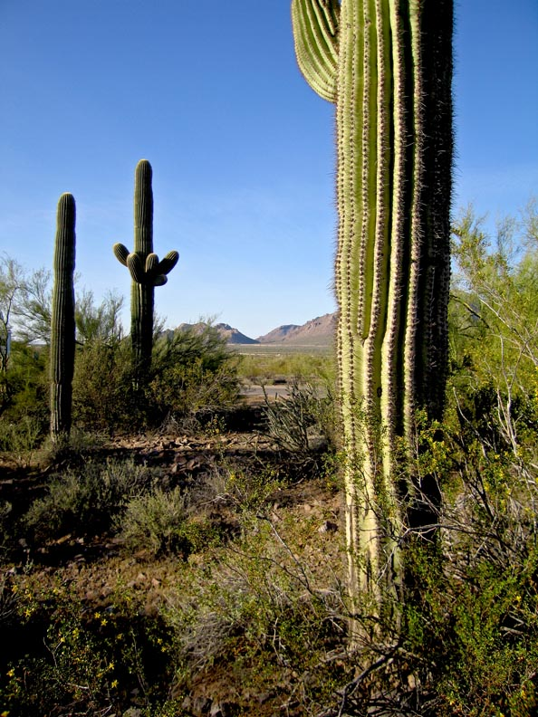 Click image for larger version  Name:Picacho_Mar09_36_Sm.jpg Views:72 Size:181.9 KB ID:78116