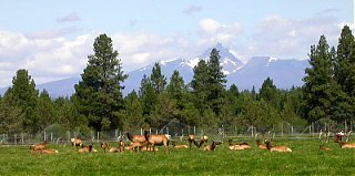 Click image for larger version  Name:elk&sisters.jpg Views:233 Size:52.1 KB ID:7837