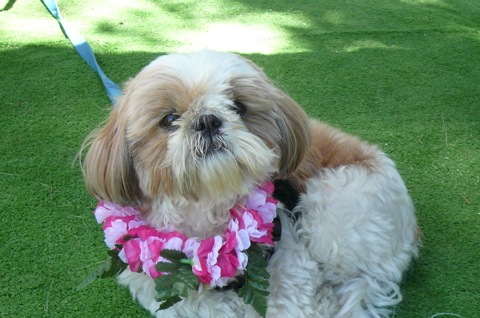 Click image for larger version  Name:Daisy Lei.jpg Views:55 Size:110.8 KB ID:79021