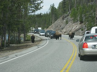 Click image for larger version  Name:B Yellowstone 004.jpg Views:228 Size:391.1 KB ID:80621