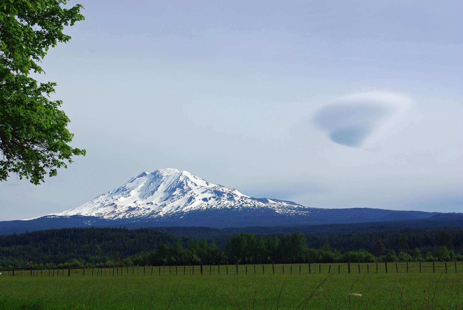 Click image for larger version  Name:mt adams visitor.jpg Views:75 Size:182.8 KB ID:80931