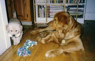 Click image for larger version  Name:lola(puppy) and rocky.jpg Views:1036 Size:40.4 KB ID:816