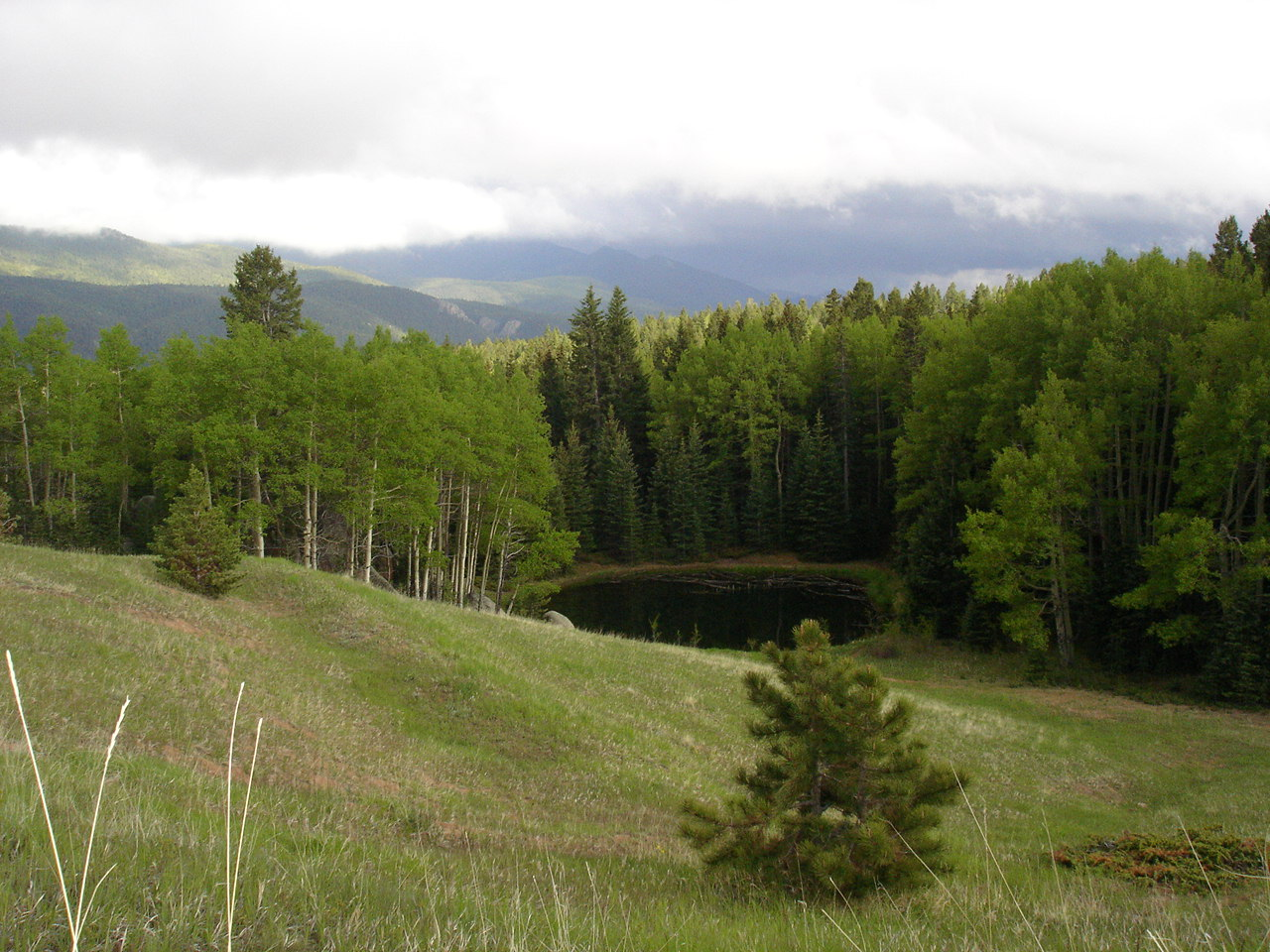 Click image for larger version  Name:Peakview pond.jpg Views:83 Size:320.3 KB ID:84430