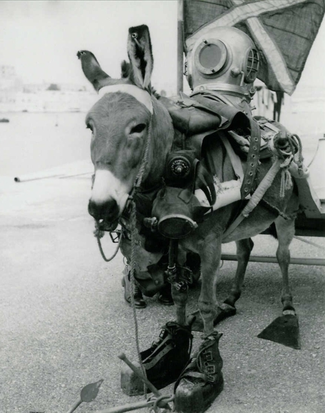 Click image for larger version  Name:Diving Donkey.jpg Views:57 Size:190.2 KB ID:84809