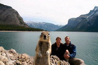 Click image for larger version  Name:cgy-squirrel-brandts.jpg Views:97 Size:38.7 KB ID:85370