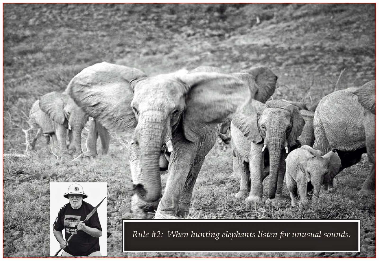 Click image for larger version  Name:dale & elephants 2500.jpg Views:52 Size:359.0 KB ID:85738