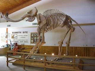 Click image for larger version  Name:wooly mammoth 004 [Desktop Resolution].JPG Views:124 Size:177.1 KB ID:88672