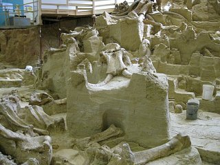 Click image for larger version  Name:wooly mammoth 010 [Desktop Resolution].JPG Views:122 Size:233.0 KB ID:88674