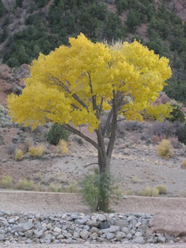 Click image for larger version  Name:Cedar City Utah 030 [Desktop Resolution].JPG Views:75 Size:148.0 KB ID:89017