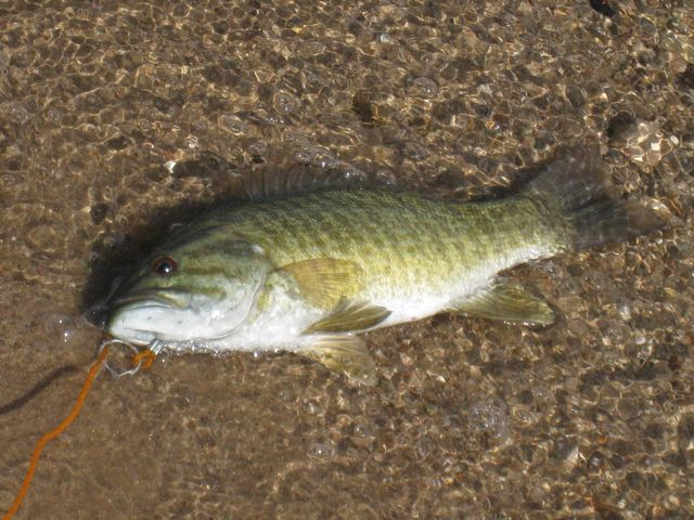 Click image for larger version  Name:Catch of the Day.jpg Views:77 Size:77.2 KB ID:91955