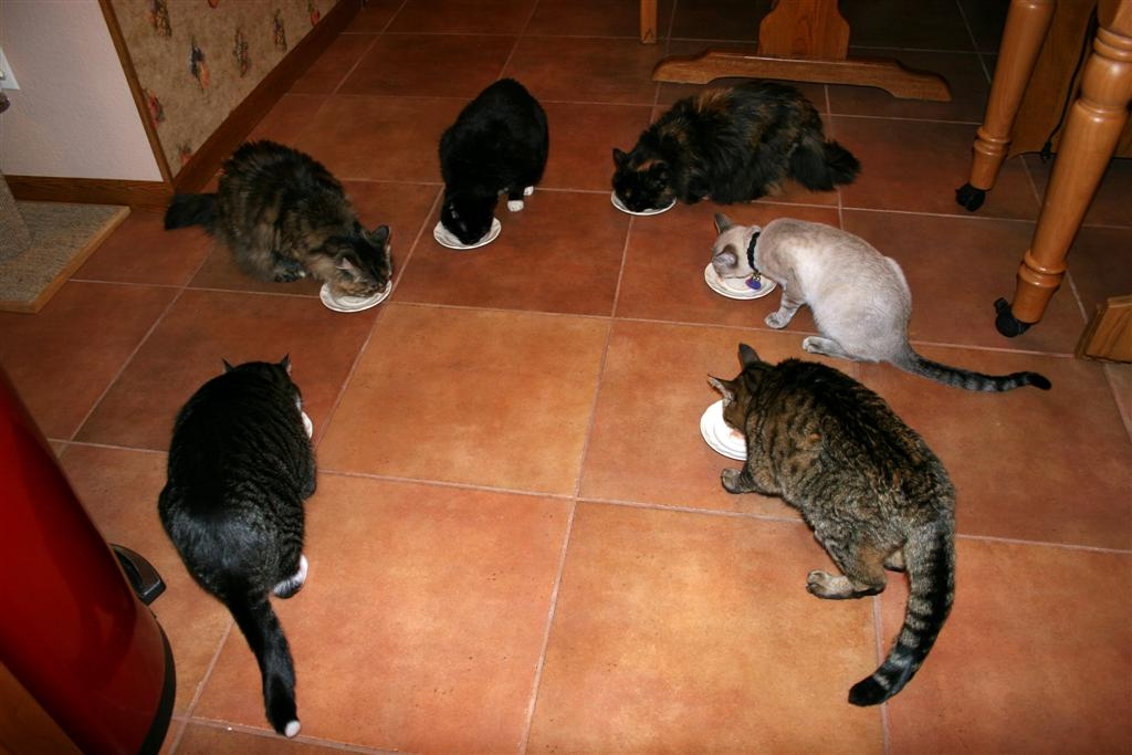Click image for larger version  Name:e-cats-tuna2009 (Large).jpg Views:94 Size:89.2 KB ID:92034