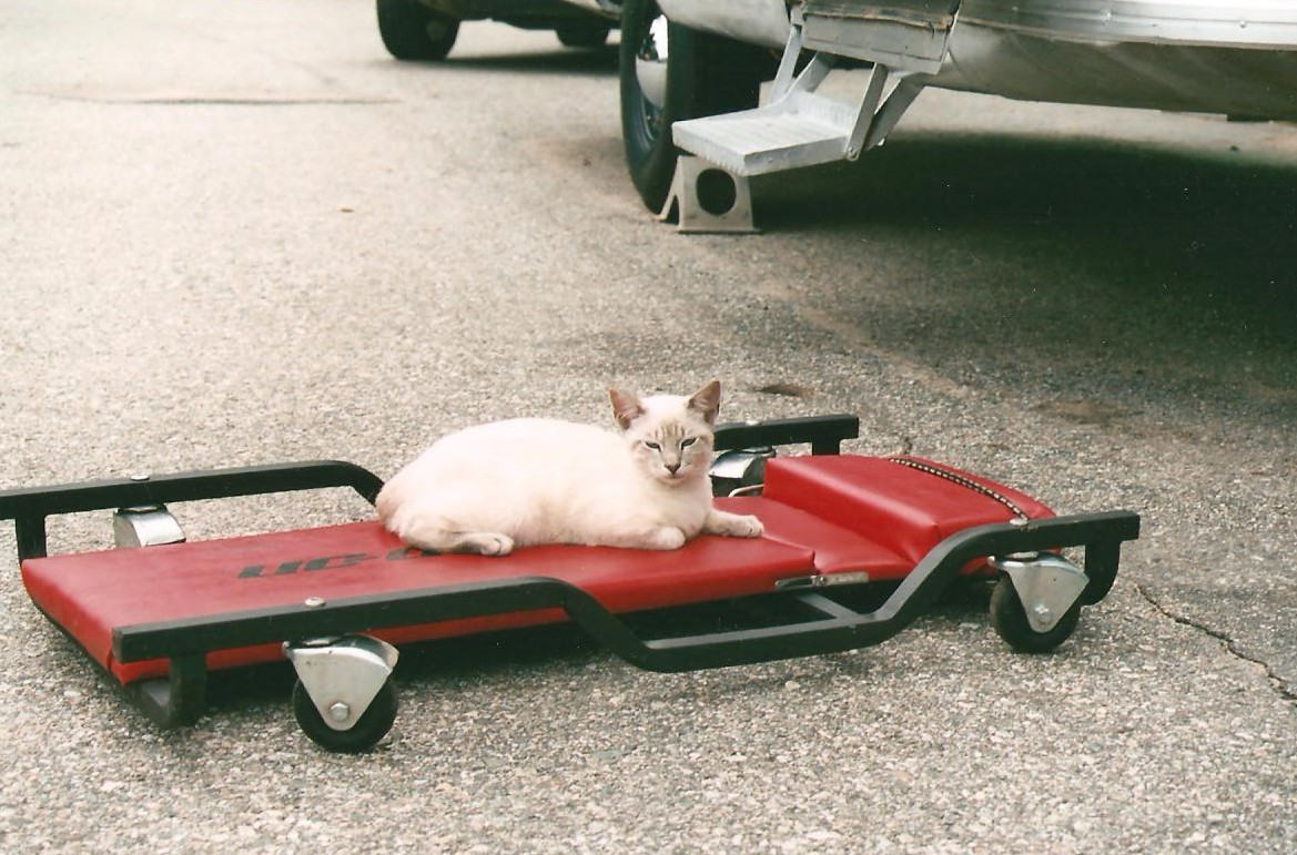 Click image for larger version  Name:kitty crew 001.jpg Views:78 Size:239.7 KB ID:93679