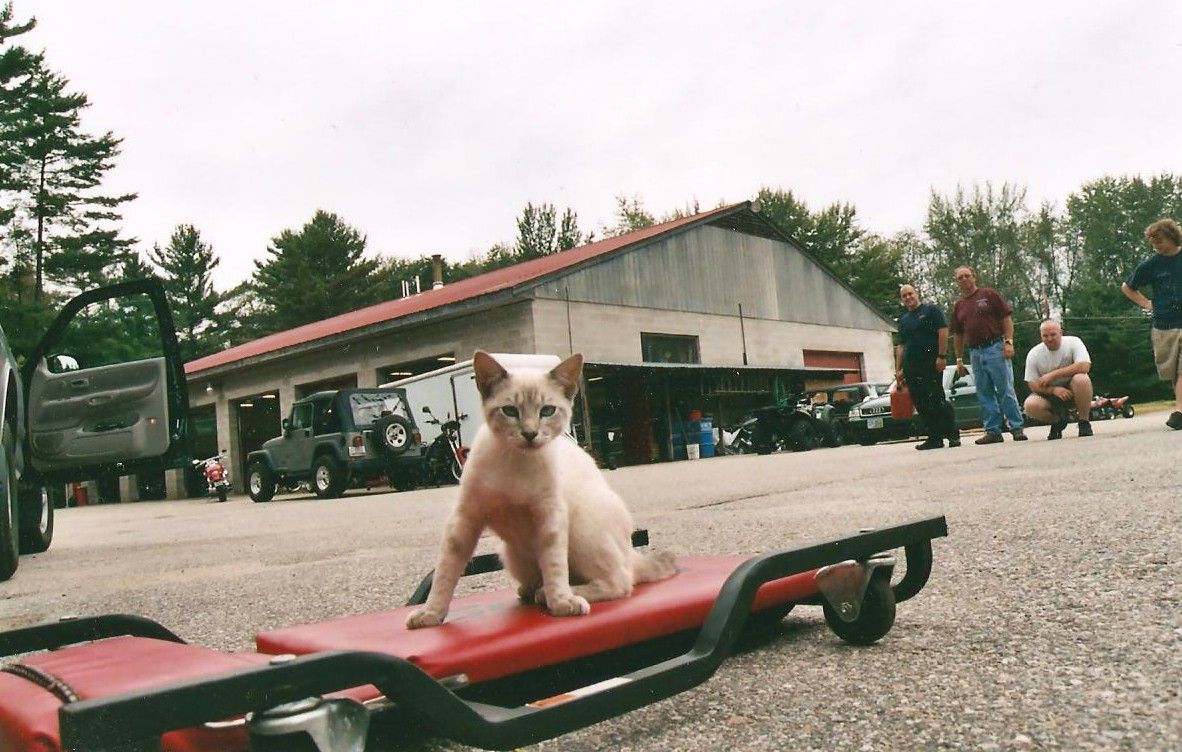 Click image for larger version  Name:crew kitty 001.jpg Views:66 Size:229.4 KB ID:93680