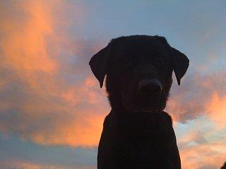 Click image for larger version  Name:Vige at Sunset.jpg Views:62 Size:247.3 KB ID:94771