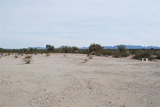 Click image for larger version  Name:greasewood 2.jpg Views:99 Size:50.5 KB ID:95425