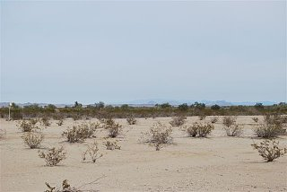 Click image for larger version  Name:greasewood 3.jpg Views:101 Size:41.2 KB ID:95426
