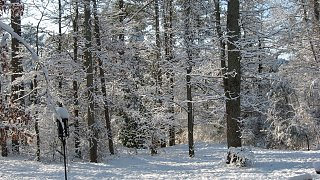 Click image for larger version  Name:Snow 2-13-10 003.jpg Views:125 Size:148.0 KB ID:96106