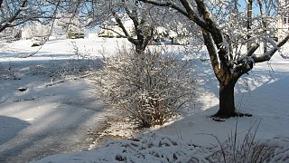 Click image for larger version  Name:Snow 2-13-10 005.jpg Views:113 Size:119.0 KB ID:96107