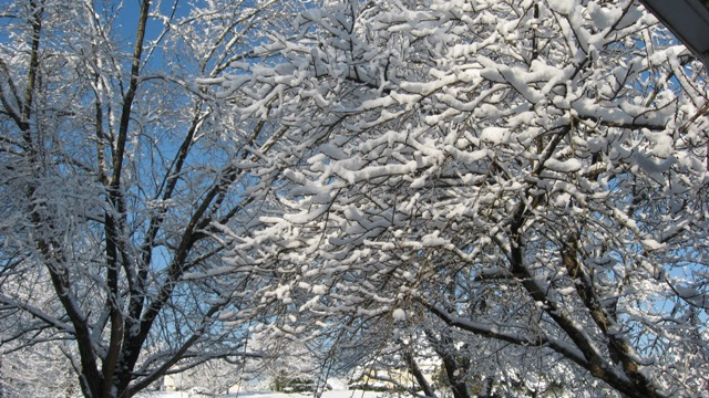 Click image for larger version  Name:Snow 2-13-10 004.jpg Views:88 Size:152.8 KB ID:96108
