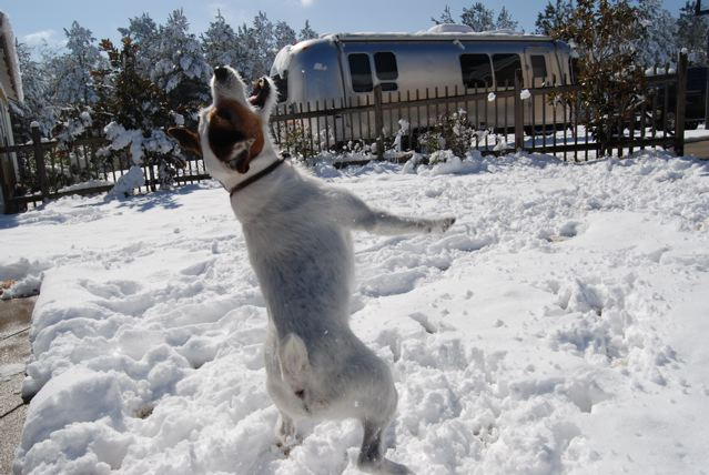 Click image for larger version  Name:Cooper jumps for snow.jpg Views:100 Size:90.0 KB ID:96287