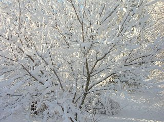 Click image for larger version  Name:Snow 4.jpg Views:110 Size:227.3 KB ID:96701
