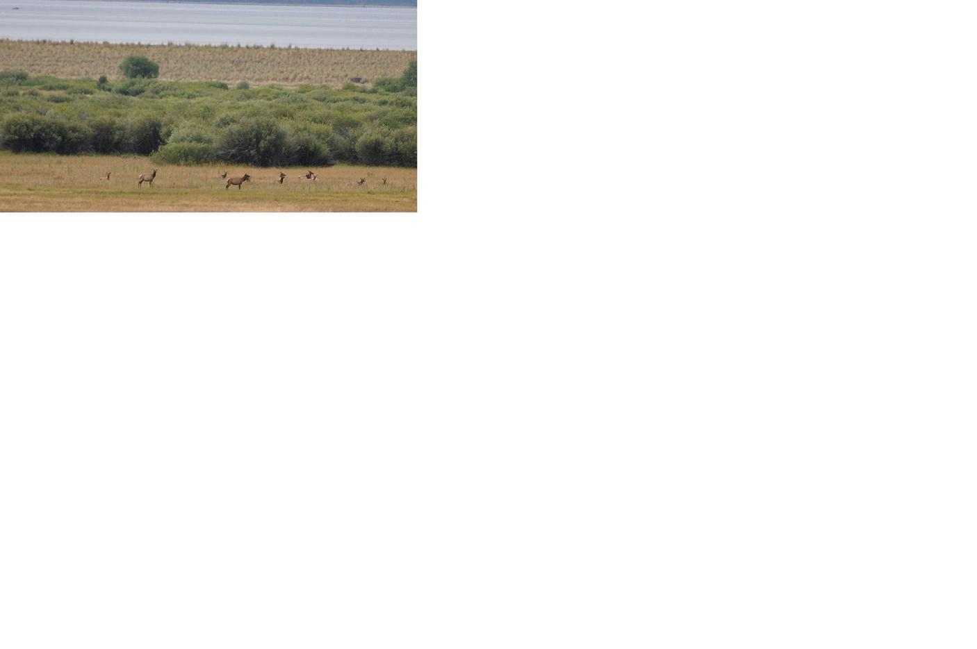 Click image for larger version  Name:elk.JPG Views:151 Size:45.3 KB ID:1864