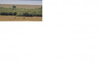 Click image for larger version  Name:elk.JPG Views:1457 Size:45.3 KB ID:1864
