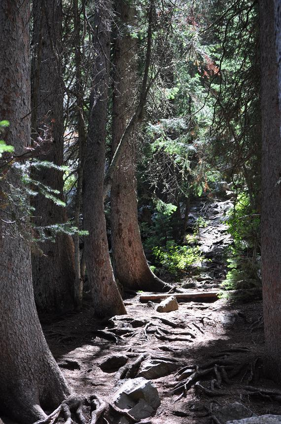 Click image for larger version  Name:Trails upward.JPG Views:2111 Size:198.4 KB ID:1874