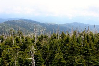Click image for larger version  Name:View from Clingmans.jpg Views:177 Size:61.7 KB ID:3812